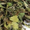 Weißer Tee Fuding 'Pai Mu Tan'