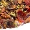 Kräutertee 'Holunder Zimt' mit Moringa, natürlich